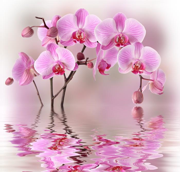 fototapete rosa orchideen mit wasser reflexion pixers wir leben um zu ver ndern. Black Bedroom Furniture Sets. Home Design Ideas