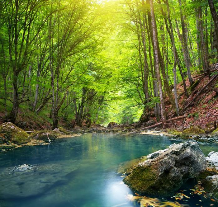Carta da parati fiume nella foresta di montagna pixers for Carta da parati per casa in montagna