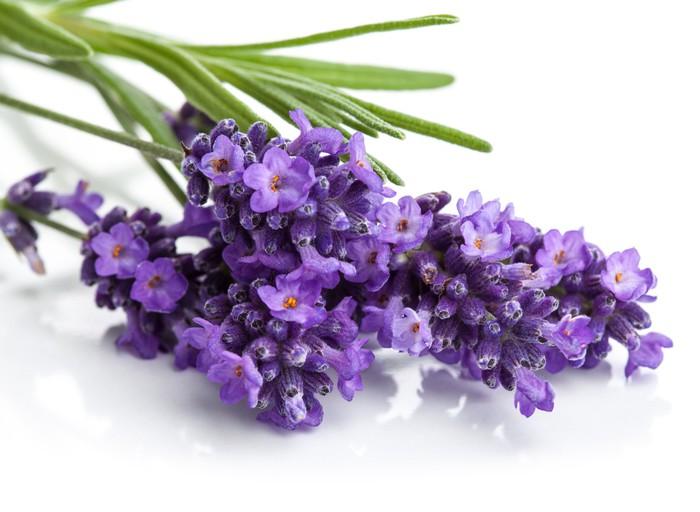 Diptyque Fleur de lavande isolé - Santé et médecine