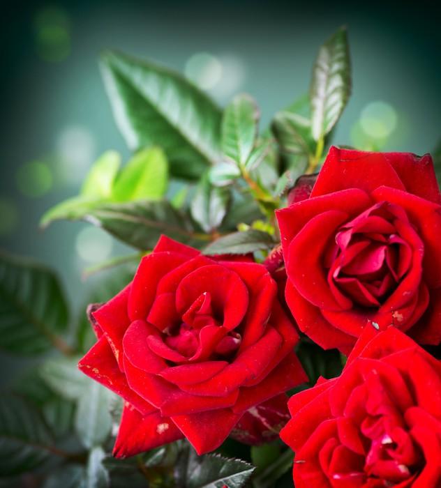 Vinylová Tapeta Růže květ - Témata