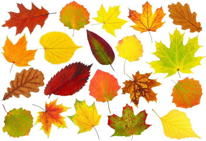 Vinylová Tapeta Barevné podzimní listí na bílém - Roční období