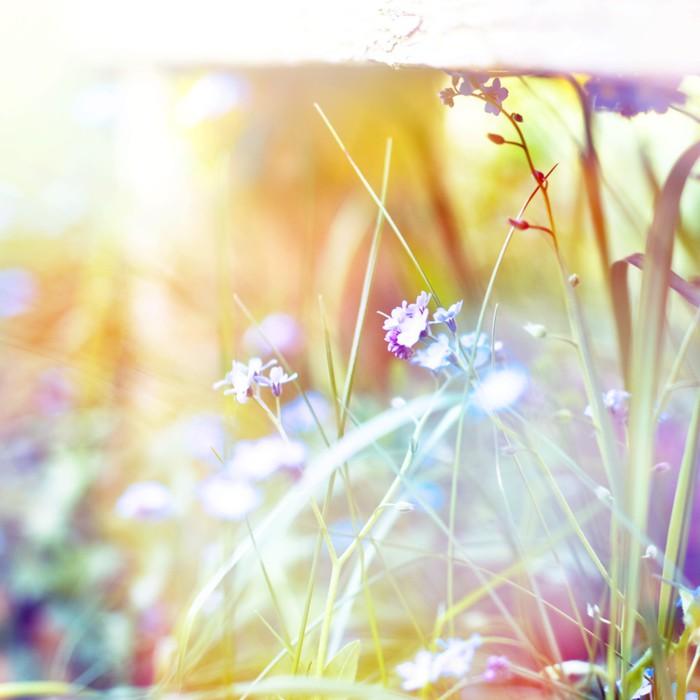 Vinylová Tapeta Krásné květiny vyrobené s barevnými filtry - Styly