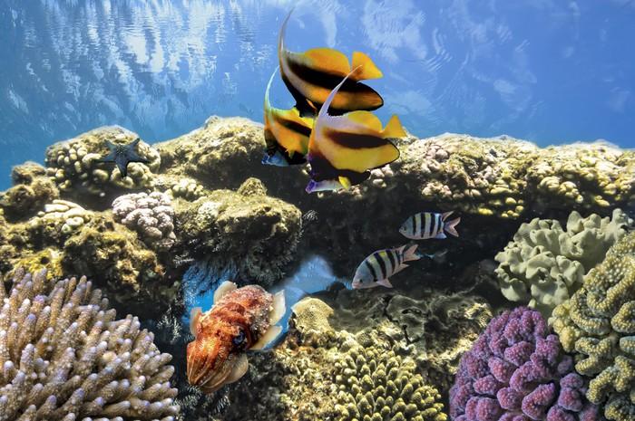 Vinylová Tapeta Tropical Fish na korálovém útesu v moři Red - Vodní a mořský život