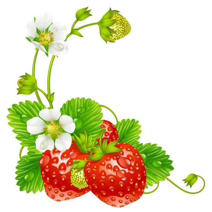 Vector strawberry frame isolated on background Wall Mural • Pixers ...