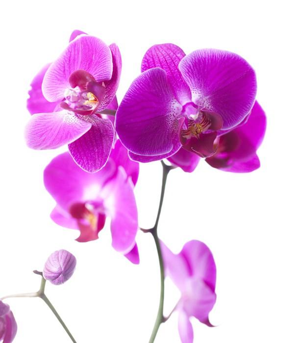Papier Peint Vinyle Luxe orchidée - Fleurs