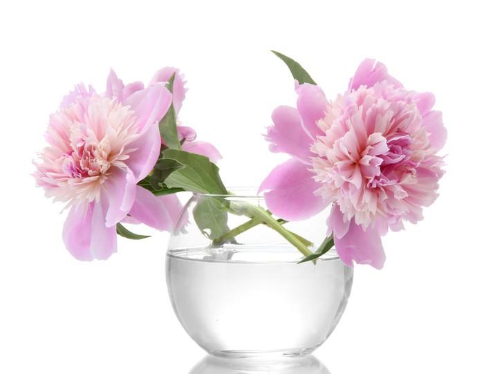 poster rosa pfingstrosen blumen in der vase isoliert auf wei pixers wir leben um zu ver ndern. Black Bedroom Furniture Sets. Home Design Ideas