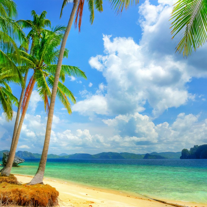 sunny tropical beach Wall Mural Pixers We live to change