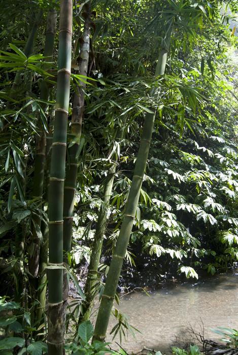 Vinylová Tapeta Bambus - Asie