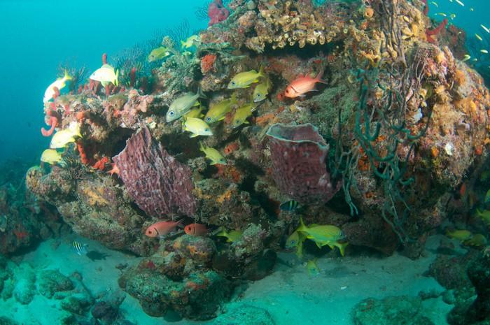 Vinylová Tapeta Různé druhy chrochtání na korálovém ostrově - Vodní a mořský život