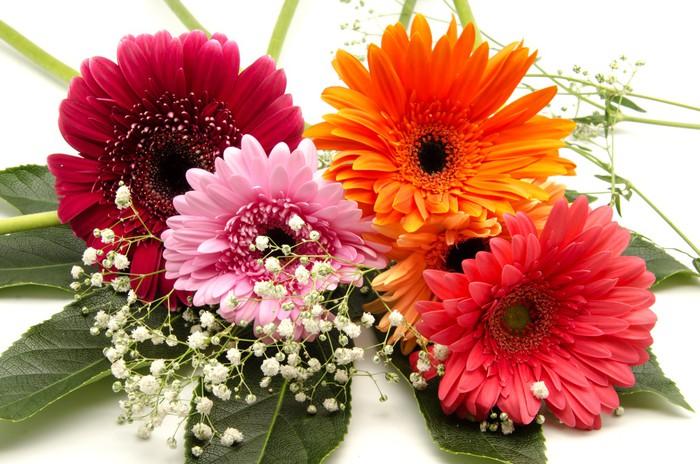 Vinylová Tapeta African Daisy - Květiny