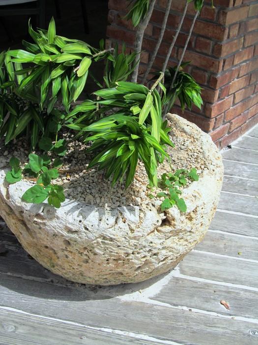 Vinylová Tapeta Planta en macetero de Coralina a la Entrada del Jardin - Domov a zahrada