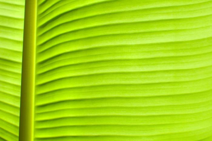 papier peint les feuilles de bananiers pixers nous vivons pour changer. Black Bedroom Furniture Sets. Home Design Ideas