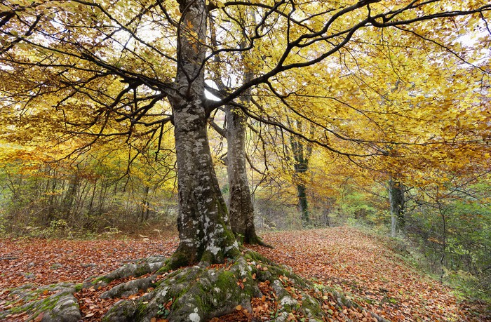 Autumn woodland wall mural pixers we live to change for Autumn wall mural