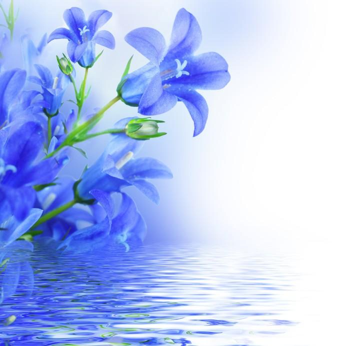 Fototapete Blumen auf einem weißen Hintergrund, dunkelblau Hand ...