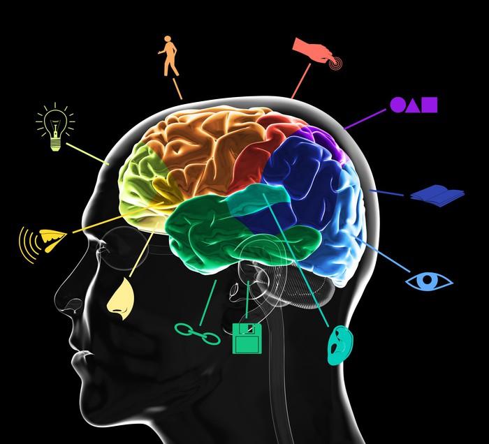 Fototapete Funktionsbereiche des Gehirns • Pixers® - Wir leben, um ...