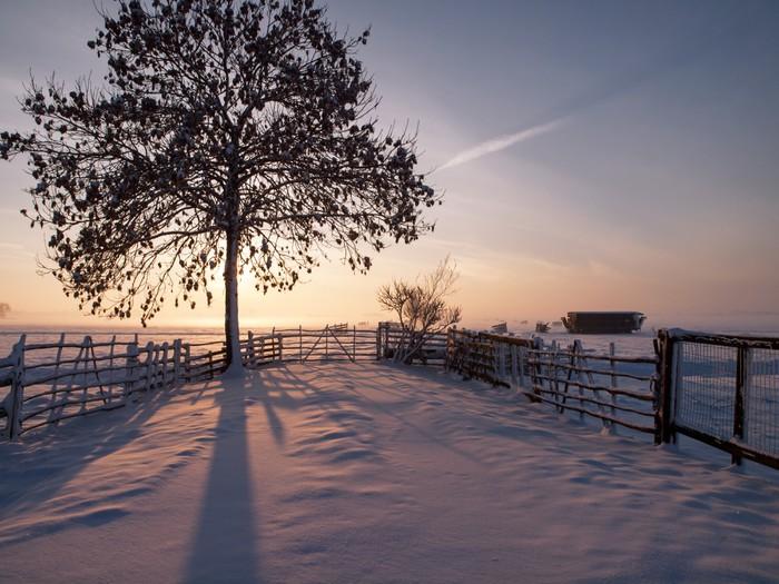 Vinylová Tapeta Zimní krajina na pastvině při západu slunce, Kinderdijk Nizozemsko - Roční období