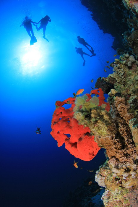 Vinylová Tapeta Coral Reef a Scuba Divers - Vodní sporty