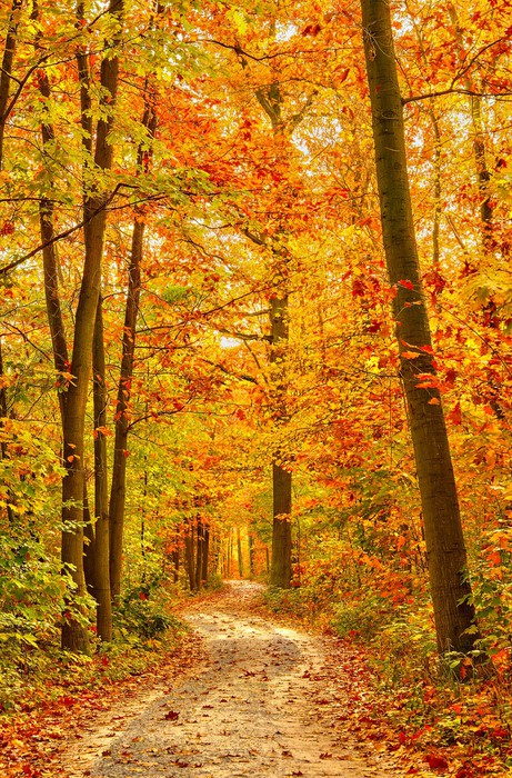 Pathway in the autumn forest Wall Mural Pixers We live to change