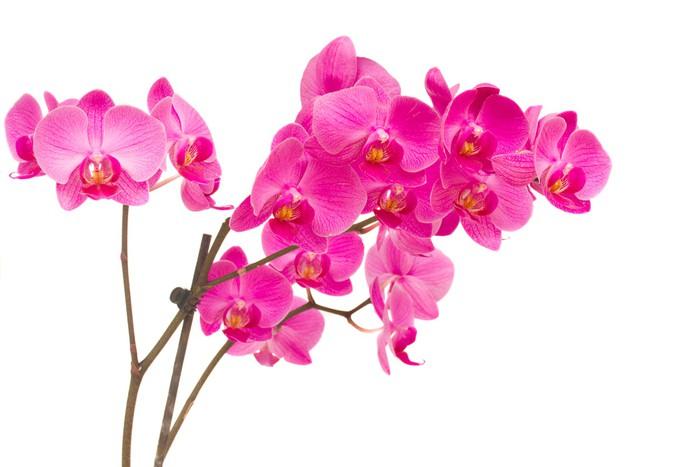 Vinylová Tapeta Orchideas - Nálepka na stěny