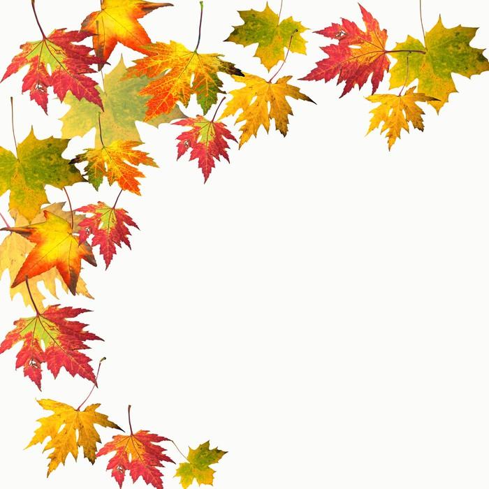 Farben des Herbstes: Bunte Ahorn-Blätter Wall Mural • Pixers® • We ...