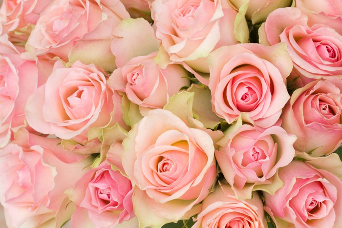 Bouquet Of Pink Roses Wall Mural Pixers 174 We Live To Change