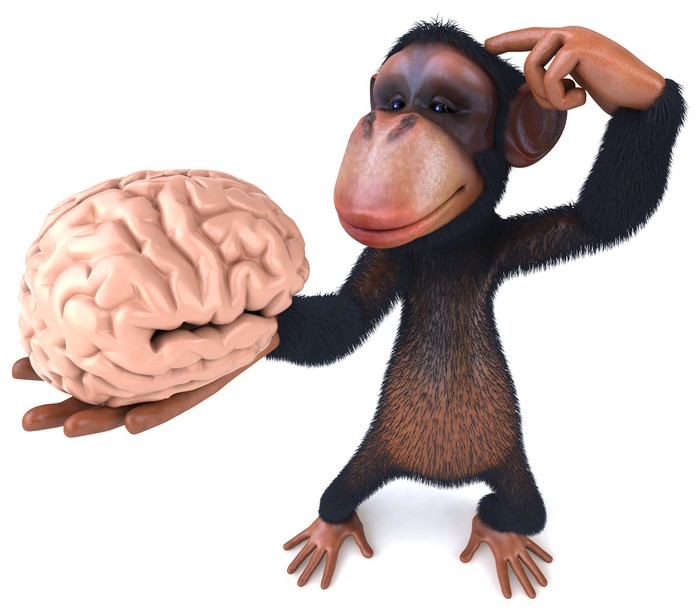 Chimp and brain vinyl wall mural signs and symbols