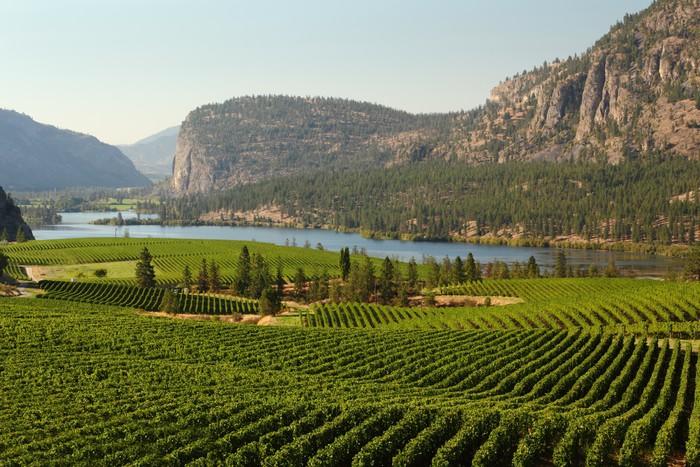 Vinylová Tapeta Okanagan Valley Vineyard Scenic, British Columbia - Amerika