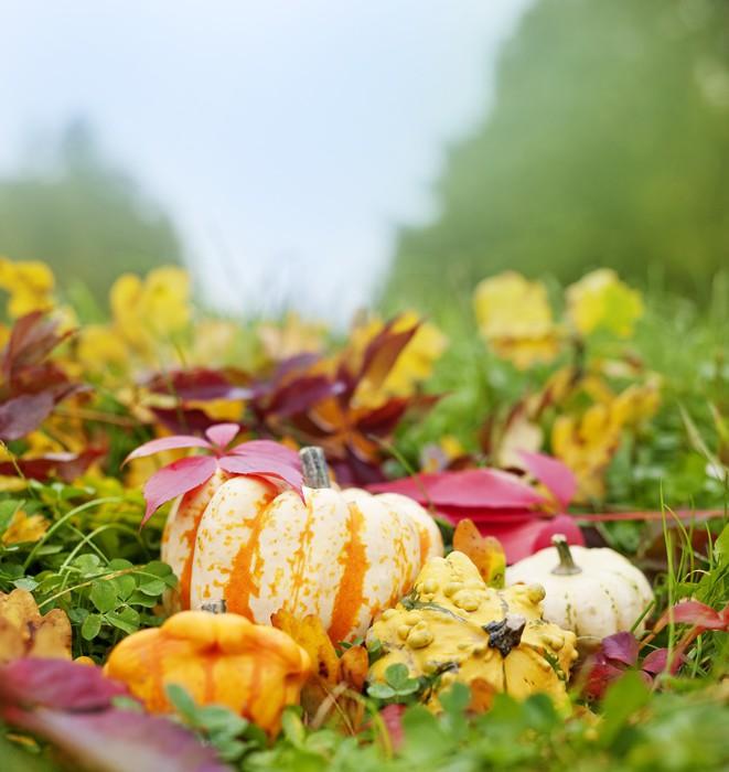Vinylová Tapeta Dýně a podzimní listí v trávě - zátiší - Roční období