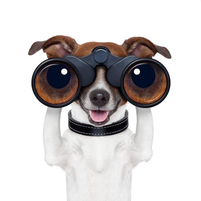 Vinylová Tapeta Dalekohledy vyhledávání hledáte pozorování satelitu psa - Nálepka na stěny