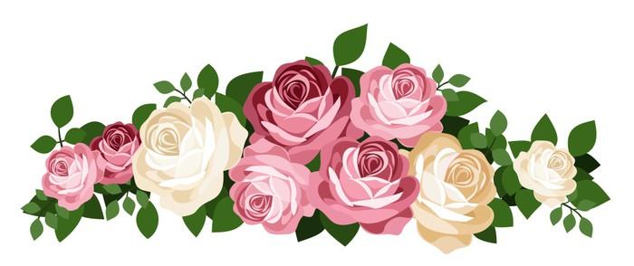 Vinylová Tapeta Růžové a bílé růže. Vektorové ilustrace. - Květiny