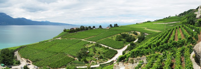 Vinylová Tapeta Famouse vinic v oblasti Lavaux proti Ženevské jezero. Switzerl - Voda