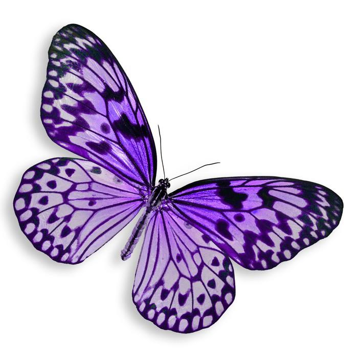 Papier Peint Vinyle Purple Butterfly volant - Sticker mural