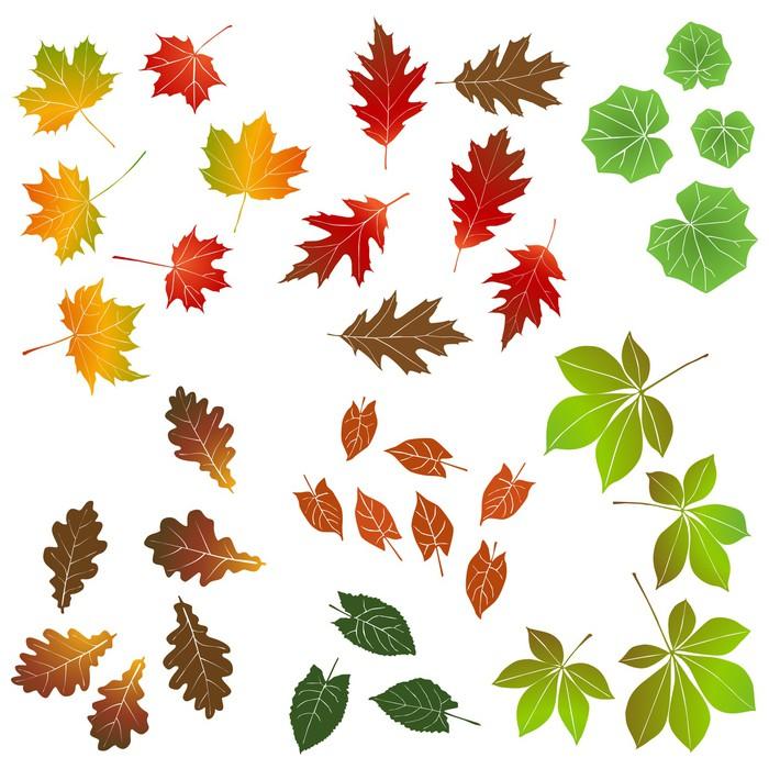 Vinylová Tapeta Podzimní listí, kolekce pro projektanty - Přírodní krásy