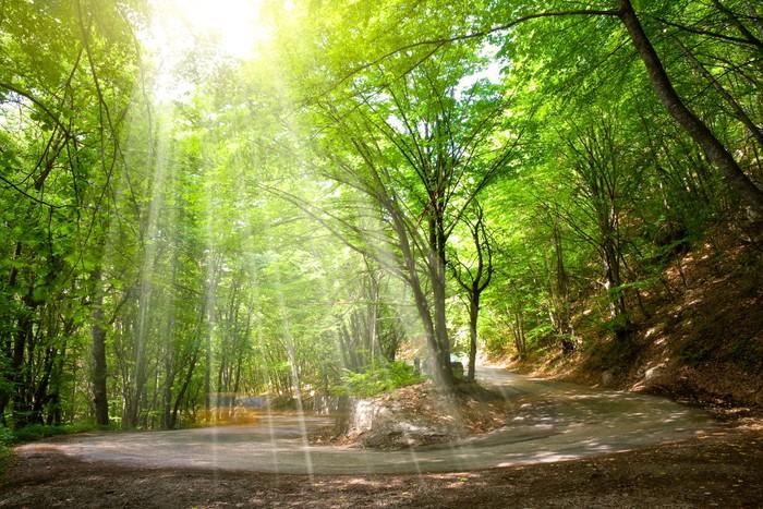 Vinylová Tapeta Road v lese - Roční období