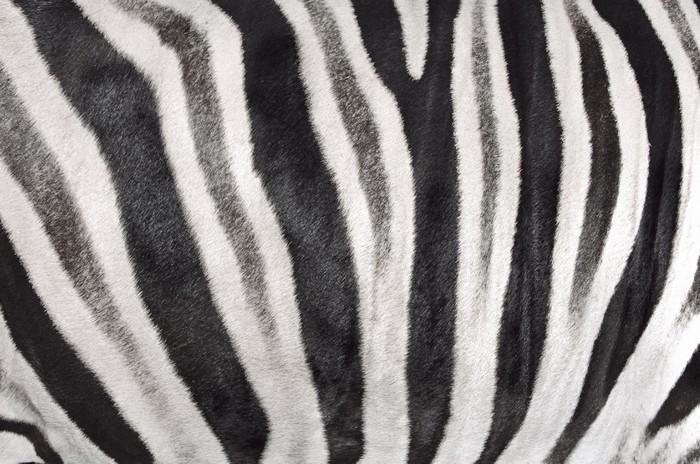 Vinylová Tapeta Struktura kůže zebra - Struktury