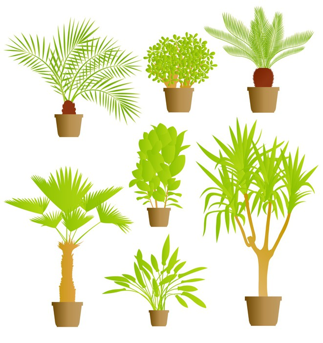 Vinilo pixerstick fondo plantas de sal n vector pixers - Plantas para salon ...