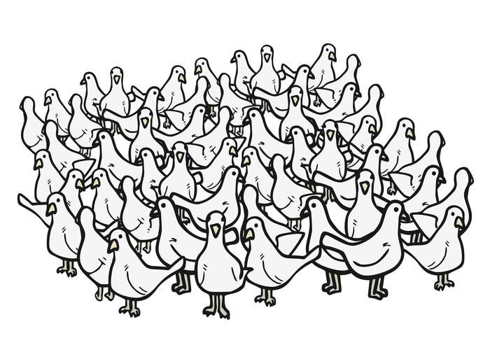 Vinylová Tapeta Mnoho ptáků - Ptáci