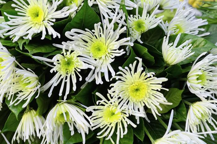 Vinylová Tapeta Bílé květy - Květiny