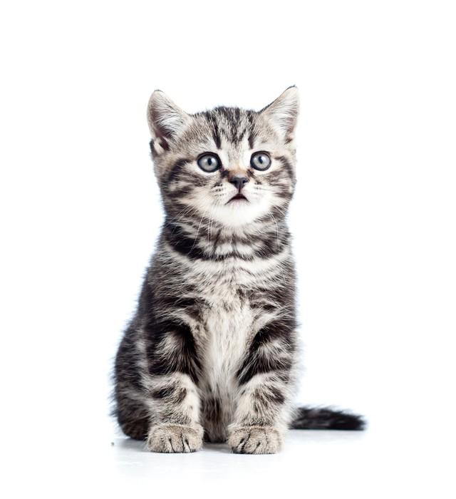 aufkleber niedliche schwarze katze katze isoliert auf wei pixers wir leben um zu ver ndern. Black Bedroom Furniture Sets. Home Design Ideas