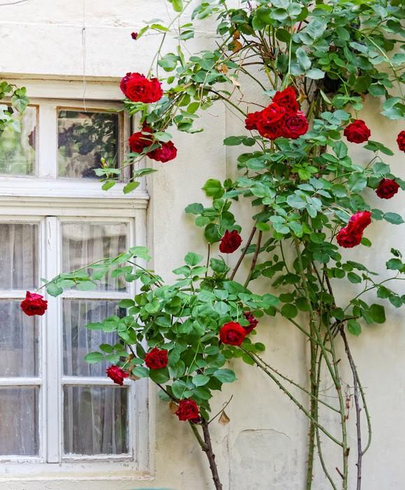 fototapete alte wand mit einem fenster schlangen bl henden rosen pixers wir leben um zu. Black Bedroom Furniture Sets. Home Design Ideas