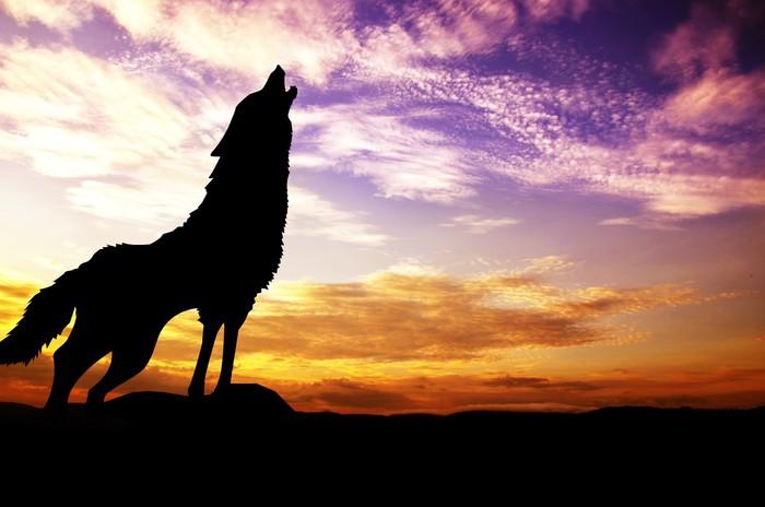 Fotobehang Wolf Die Bij De Zonsondergang Pixers 174 We