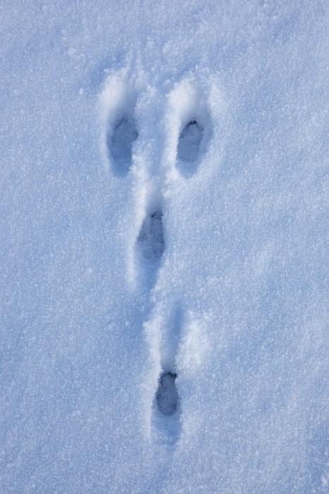 Vinylová Tapeta Hare stopy - Roční období