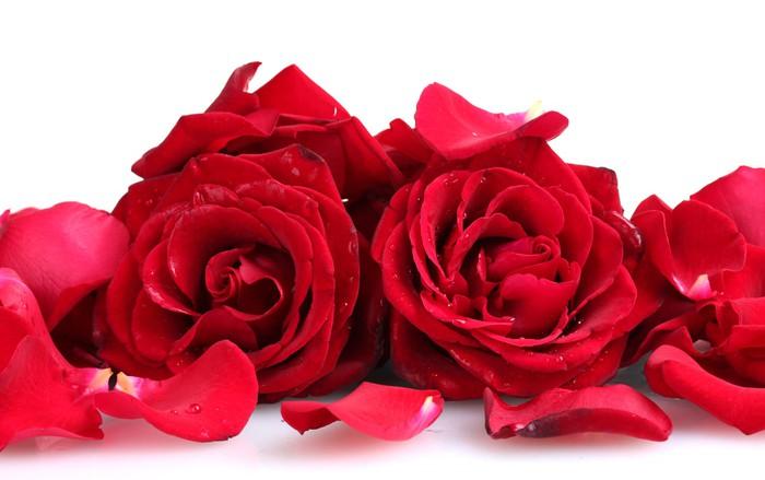 fototapete sch ne rote rosen und bl tenbl tter isoliert. Black Bedroom Furniture Sets. Home Design Ideas