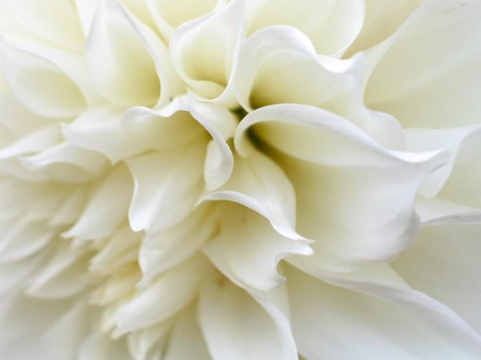 Vinylová Tapeta Bílý květ - Témata