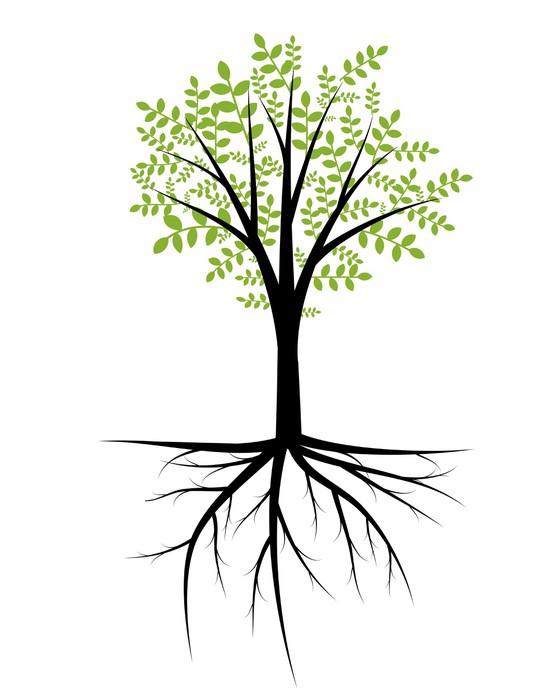 Arbre Avec Racine papier peint résumé des arbres avec un feuillage décoratif et les