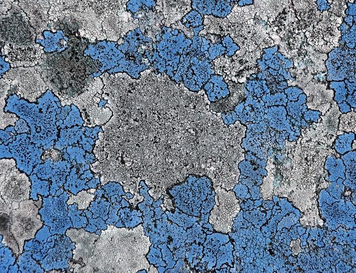 Vinylová Tapeta Modrý mech - Domov a zahrada
