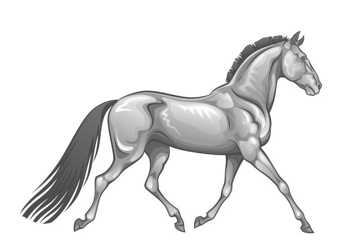 Vinylová Tapeta Stříbrný kůň - Nálepka na stěny