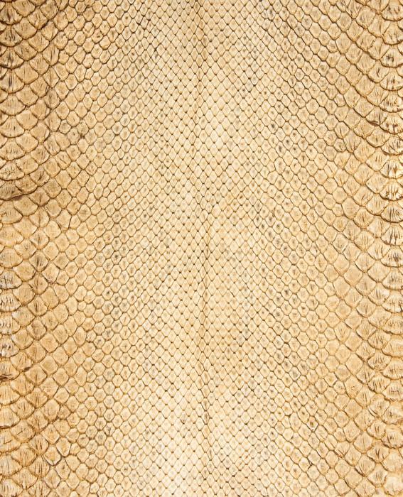 papier peint serpent. Black Bedroom Furniture Sets. Home Design Ideas