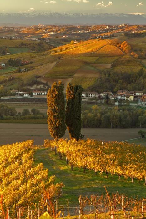 Vinylová Tapeta Vinice v Piemonte, Itálie. - Témata