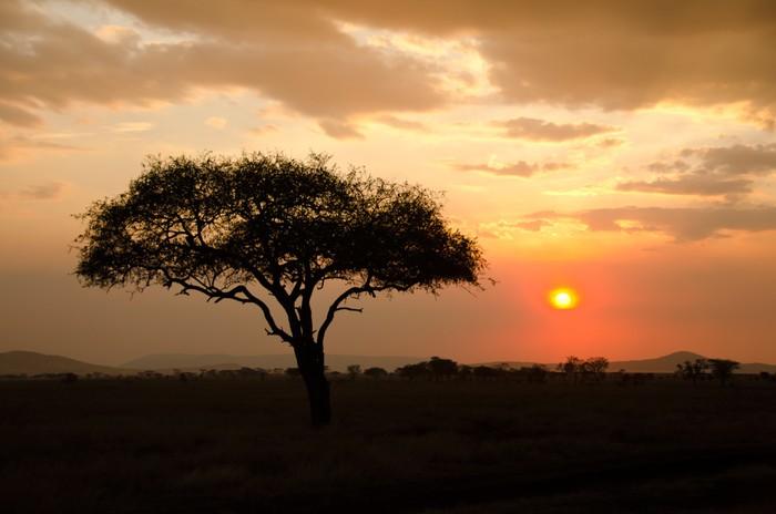 Vinylová Tapeta Nastavení slunce vteřině s jedním akátu v Africe - Témata
